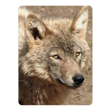 Wolves Animal Forest Peace Love Destiny Art Card